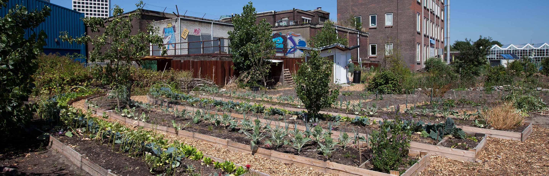 Eetbare (sier)tuinen, voedselproductie, zelfvoorzienendheid en bewustwording