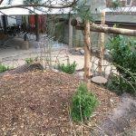 Eetbare planten schoolplein